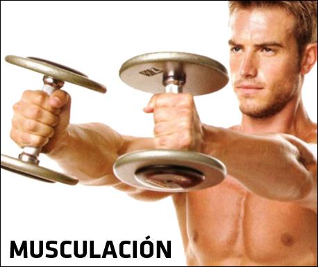 MUSCULACION + Fábricación y Venta en el Interior de Argentina de  Equipamiento Profesional para Gimnasios 29f386226c18